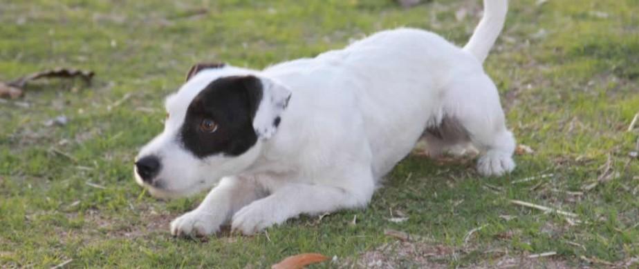 Bijou | Good Dog Tahoe